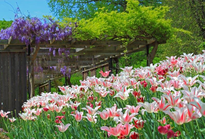 Ogród z tulipanem i żałość obraz stock