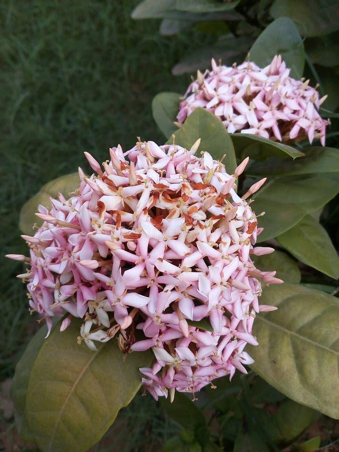 Ogródu kwiat fotografia stock