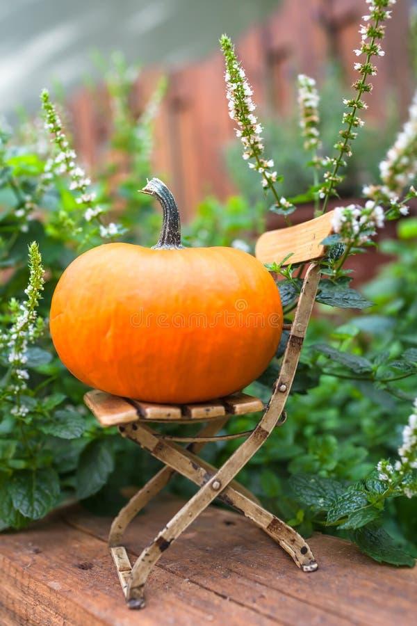 Ogródu Wciąż życie dla dziękczynienia i Halloween obrazy royalty free