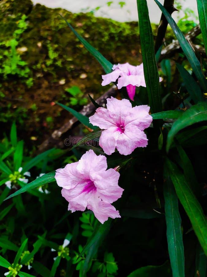 Ogródy i kwiaty sposób dowiezień ludzie wpólnie, rysuje one od ich domów & x22; fotografia royalty free