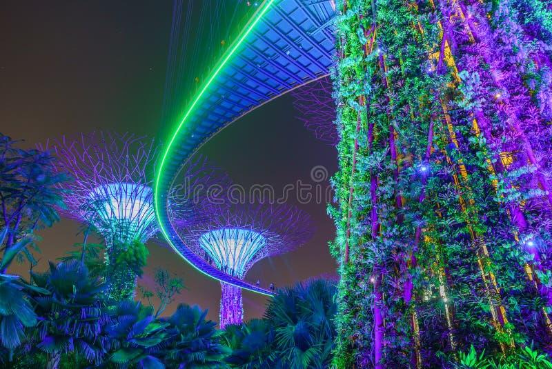 Ogródy Podpalanymi Dużymi drzewami przy nocą Singapur Azja zdjęcia stock