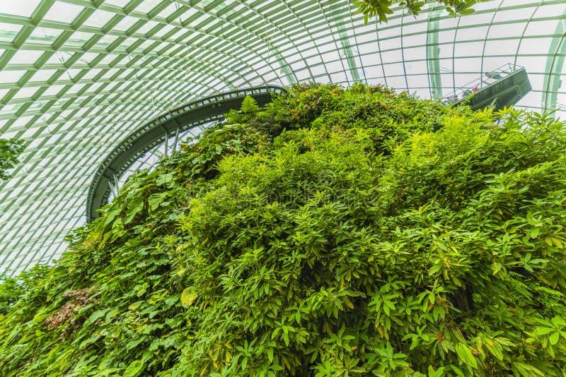 Ogródy zatoką, Obłoczna Lasowa kopuła Singapur fotografia stock