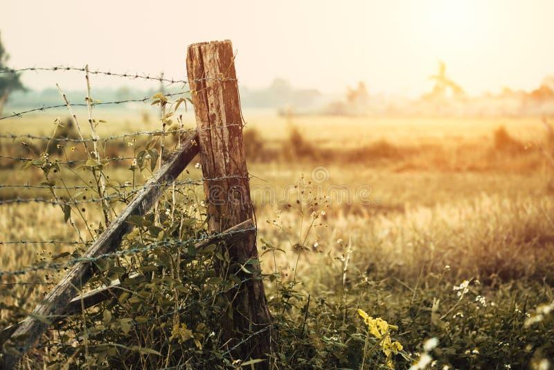 Ogranicza terenu ogrodzenia trawy suchą suchą wś obraz stock