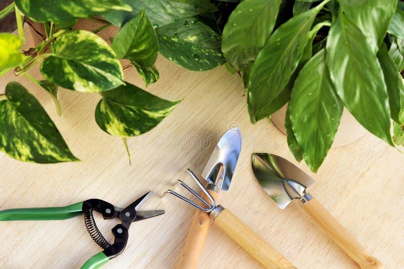 ogrodnictwa houseplants narzędzia obrazy royalty free