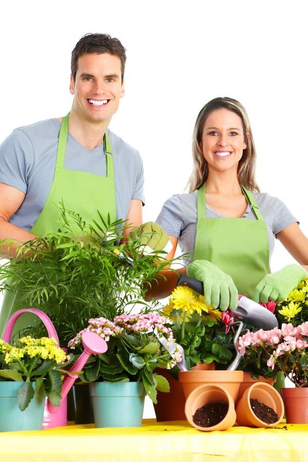 Download Ogrodnictwo obraz stock. Obraz złożonej z greenbacks - 18546045