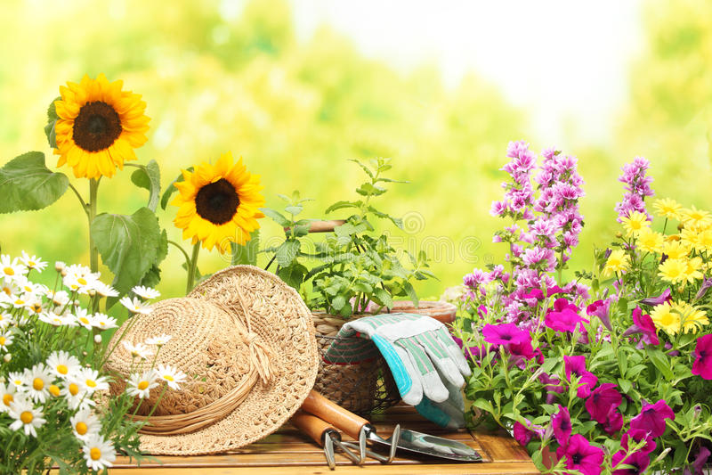 ogrodnictwo fotografia stock