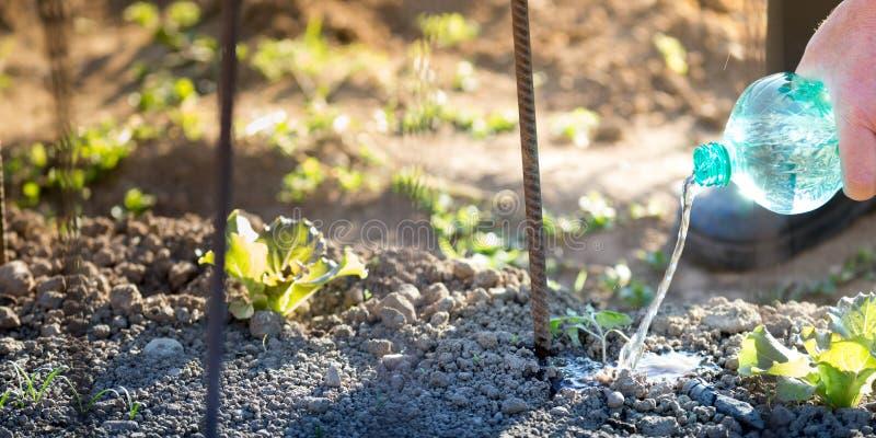 Ogrodnictwo aktywność plenerowa obrazy royalty free