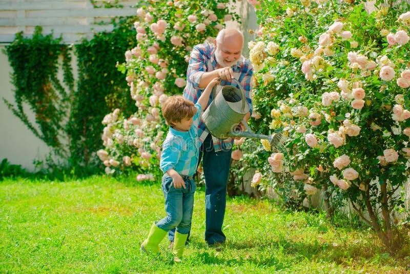 Ogrodnictwo aktywno?? z ma?ym dzieckiem i rodzin? Dziadek działanie w ogrodowym pobliskim kwiatu ogródzie Ogrodnictwo hobby zdjęcie stock
