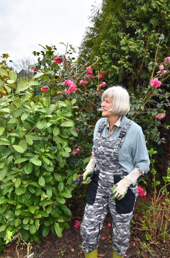 Ogrodnictwo, hobby starsza kobieta zdjęcie stock