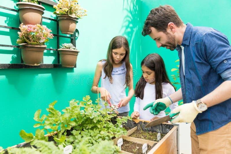 Ogrodnictwo Jest Jeden sposobem Rosnąć Ich więź obraz royalty free