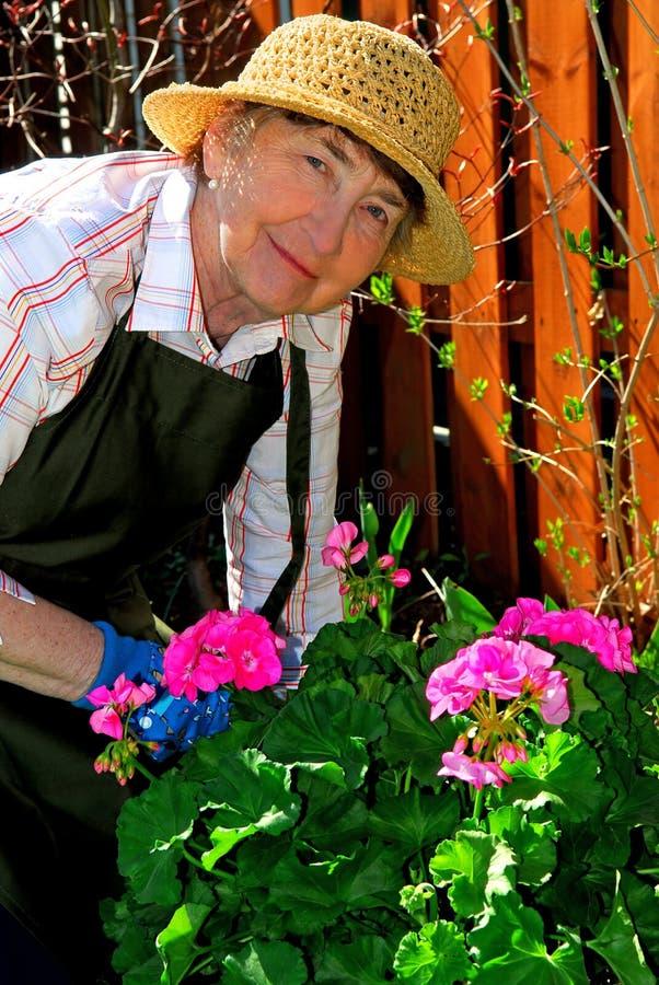 ogrodnictwo seniora kobieta obraz royalty free