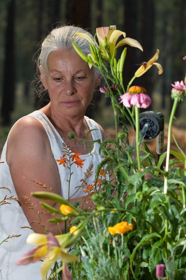 ogrodnictwo seniora kobieta fotografia royalty free