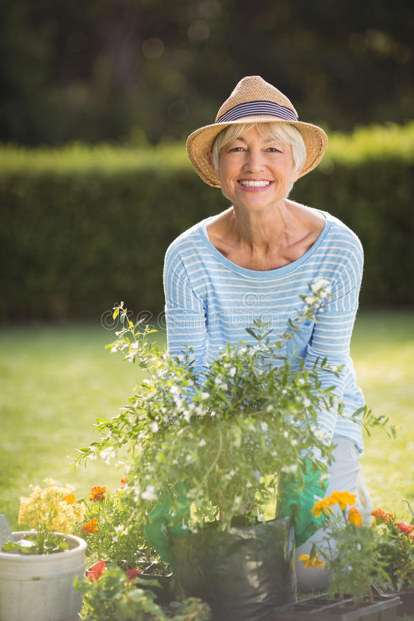 ogrodnictwo seniora kobieta zdjęcie royalty free