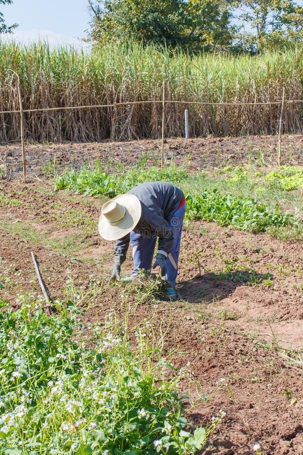 Ogrodnictwo szczegółu pracy Średniorolna sztuka zdjęcia stock