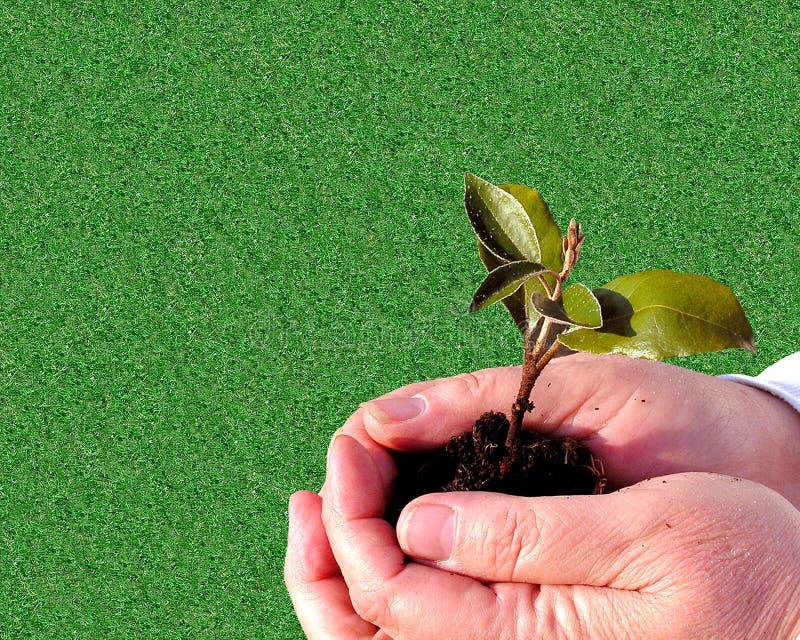 ogrodnictwo tła obrazy royalty free