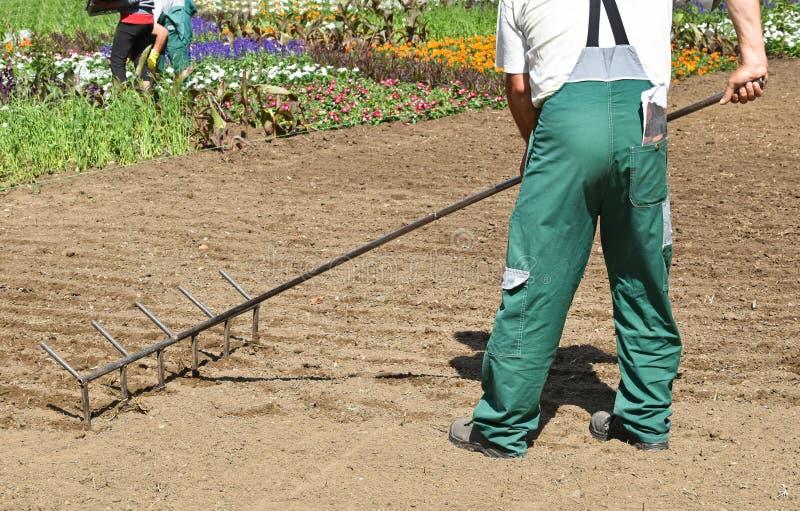 Ogrodniczek pracy z wielkim świntuchem fotografia royalty free