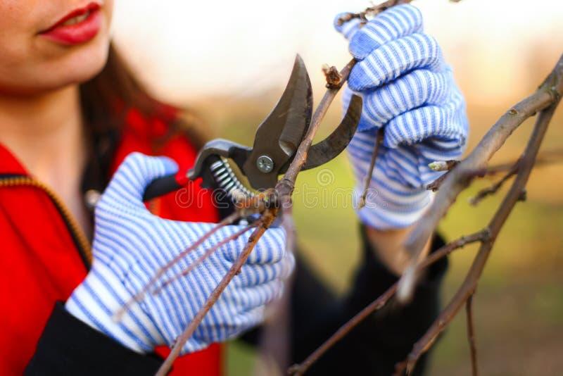 Download Ogrodniczka zdjęcie stock. Obraz złożonej z kobieta, ręka - 53792144