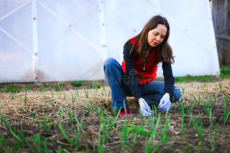 Download Ogrodniczka obraz stock. Obraz złożonej z farm, okupacyjny - 53792379