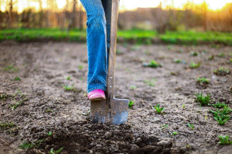 Download Ogrodniczka zdjęcie stock. Obraz złożonej z ogrodniczka - 53792700