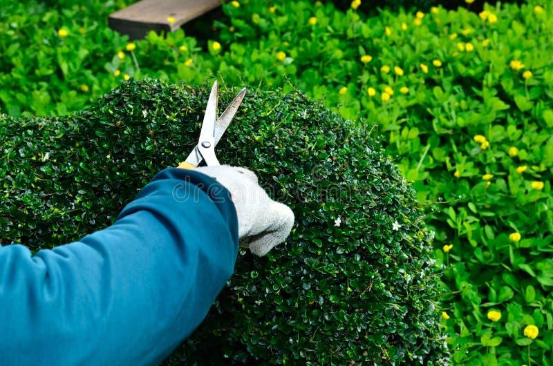 Ogrodniczka arymażu żywopłot w drzewie obraz stock