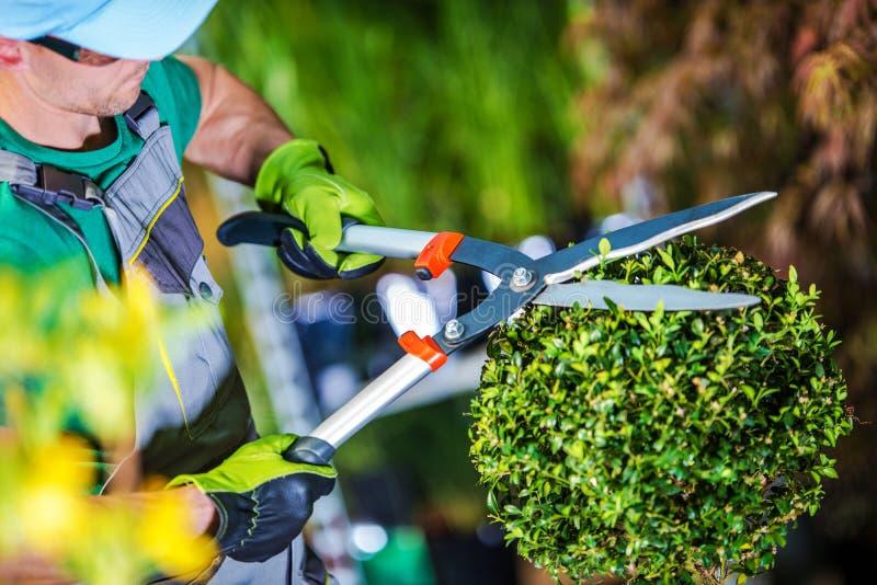 Ogrodniczka arymażu rośliny obraz stock