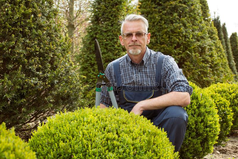 Ogrodniczka ciie krzaka dekoracyjnych strzyżenia zdjęcie royalty free
