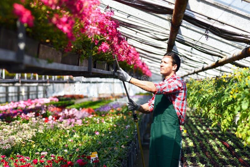 Ogrodniczka pracuje w szklarni kwiatu sklep fotografia royalty free