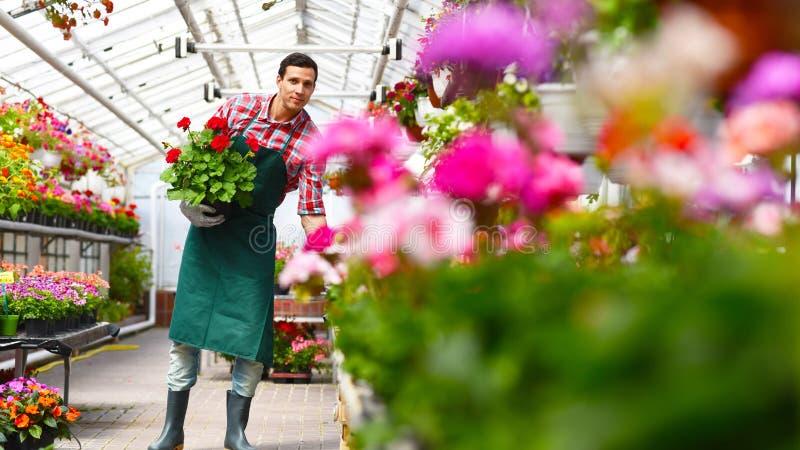 Ogrodniczka pracuje w szklarni kwiatu sklep obrazy royalty free