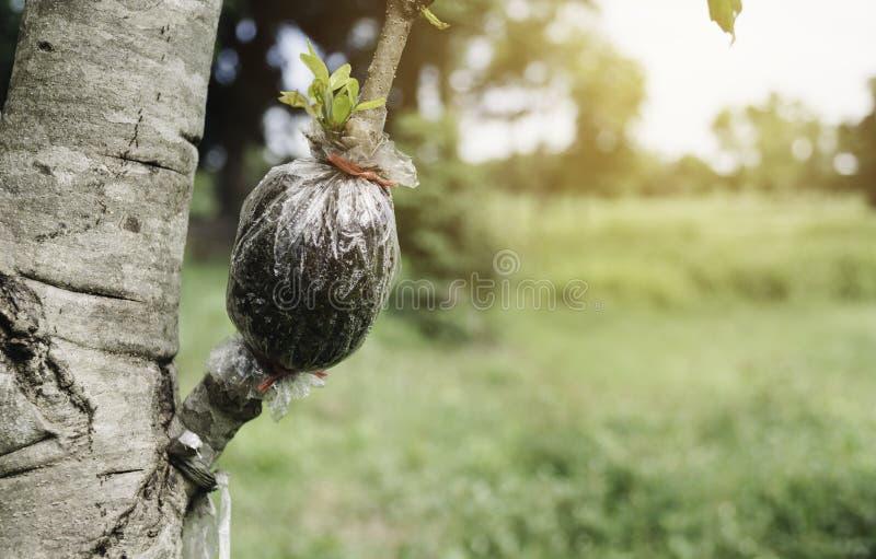 Ogrodniczka przycina drzewa z przycina? strzy?enia na natury tle zdjęcie royalty free