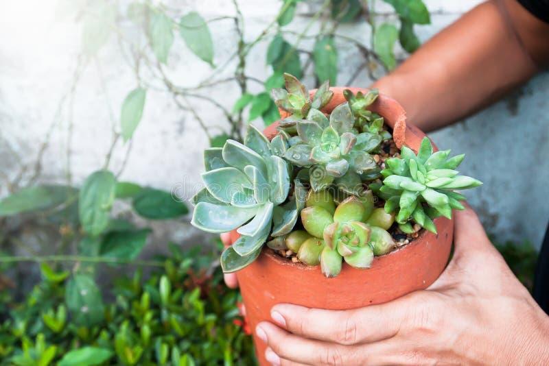 Ogrodniczka robi sukulenty w garncarstwie zdjęcie royalty free