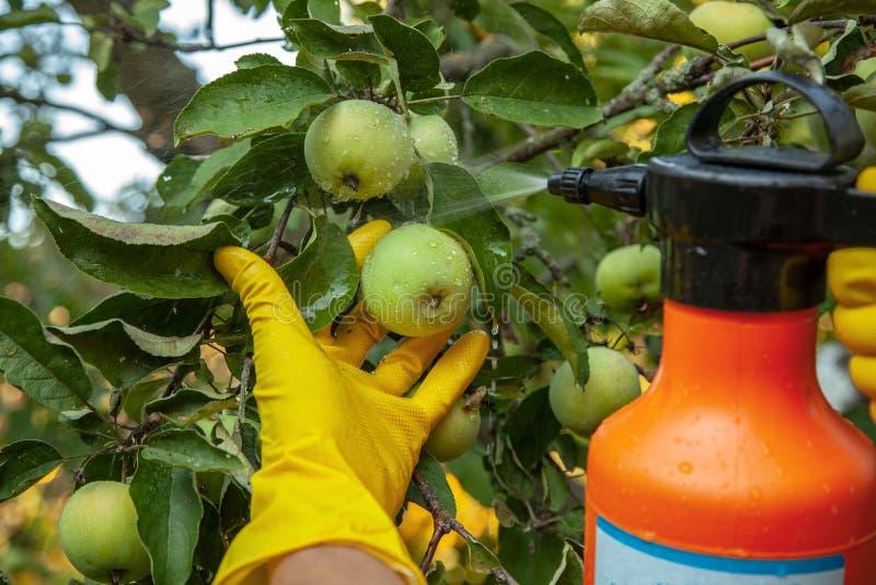 Ogrodniczka stosuje owadobójczego użyźniacz fotografia stock