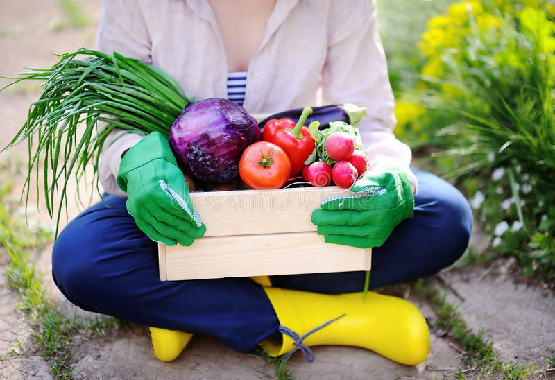 Ogrodniczka trzyma drewnianą skrzynkę z świeżymi organicznie warzywami od gospodarstwa rolnego obraz stock