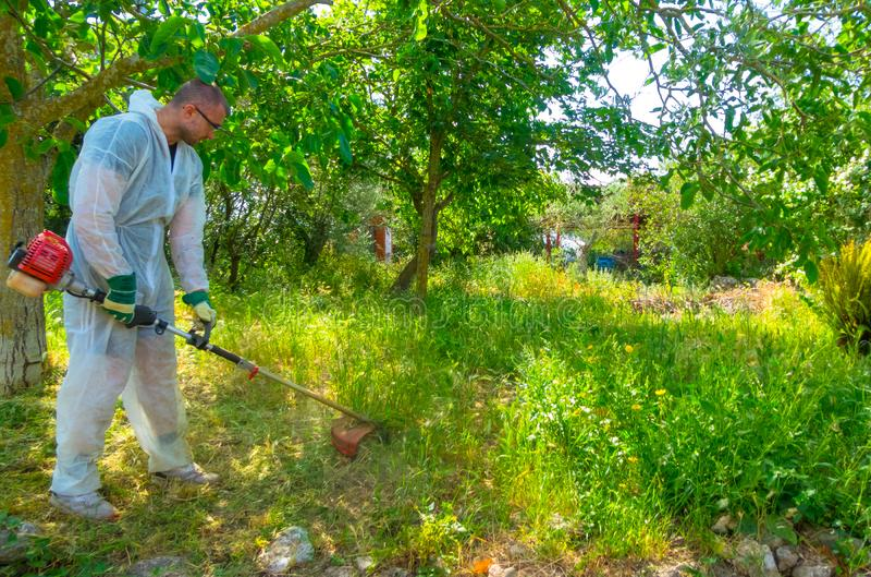 Ogrodniczka używa szczotkarskiego krajacza zdjęcie royalty free