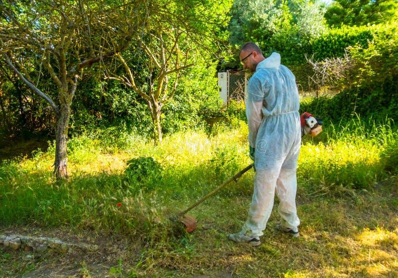 Ogrodniczka używa szczotkarskiego krajacza obraz royalty free
