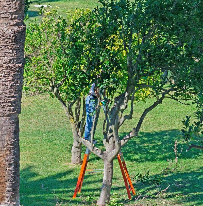 Ogrodniczka w Monserrato parku obrazy stock