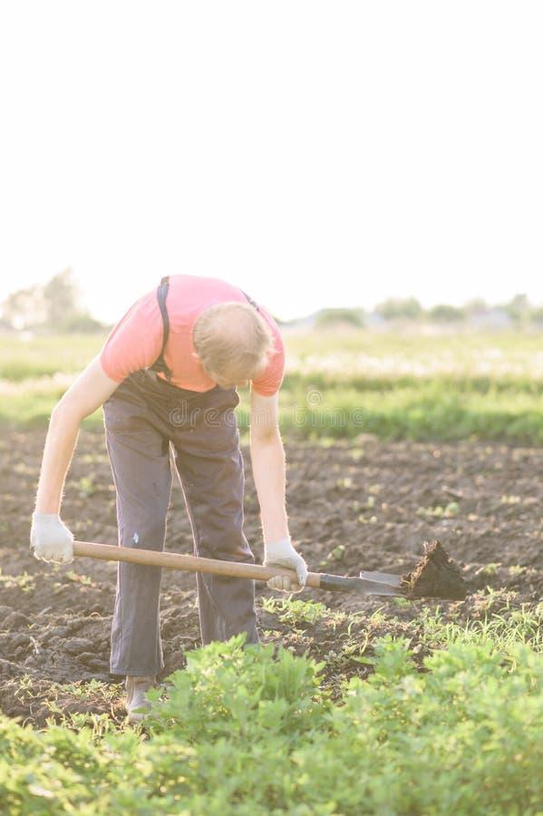 Ogrodniczka zasadza warzywa Mężczyzna robi dziury zasadzać kwiaty w ogródzie obraz royalty free
