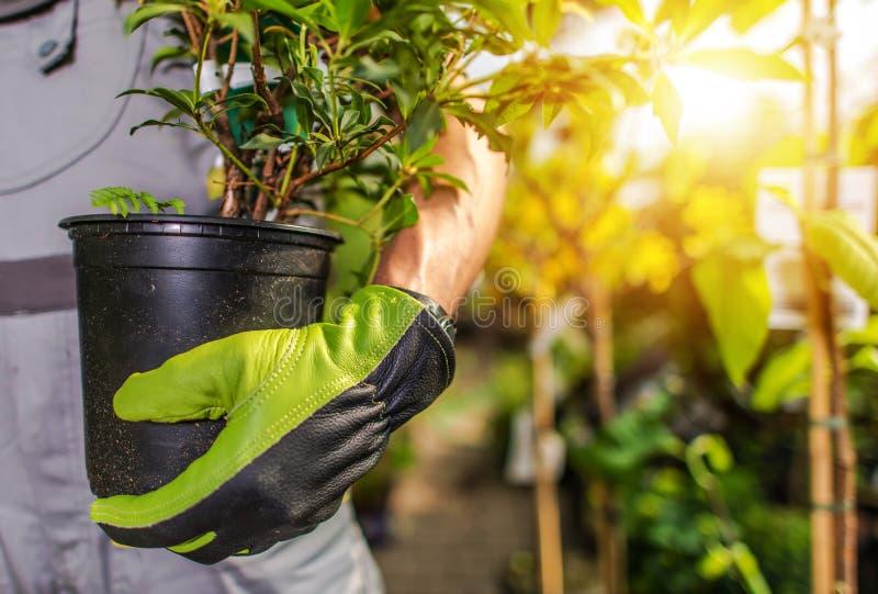 Download Ogrodniczki Flancowania Rośliny Obraz Stock - Obraz złożonej z przemysł, roślina: 106917371