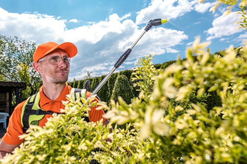 Ogrodniczki opryskiwania drzewa zdjęcia stock