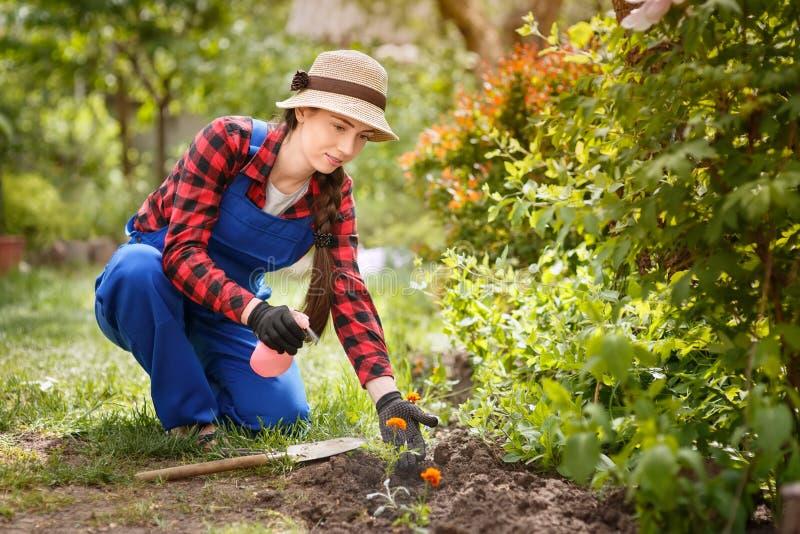 Ogrodniczki opryskiwania woda na kwiatach lub pestycyd zdjęcia royalty free