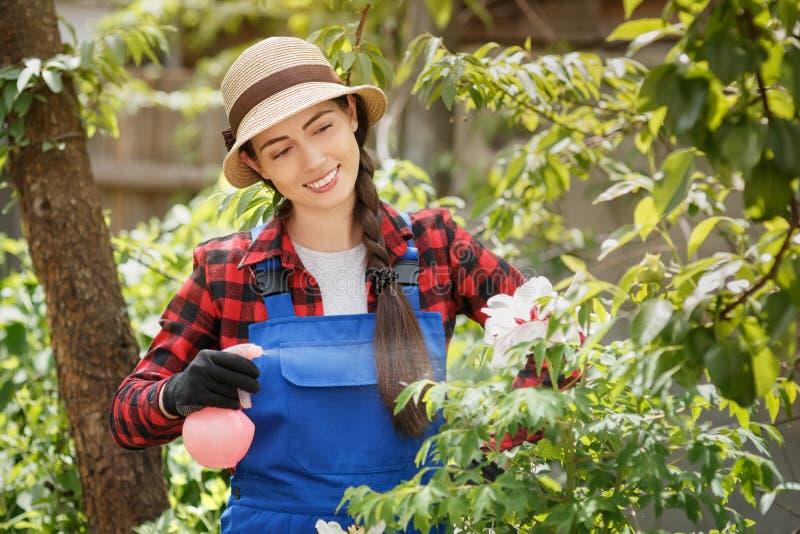 Ogrodniczki opryskiwania woda na kwiatach lub pestycyd obrazy royalty free