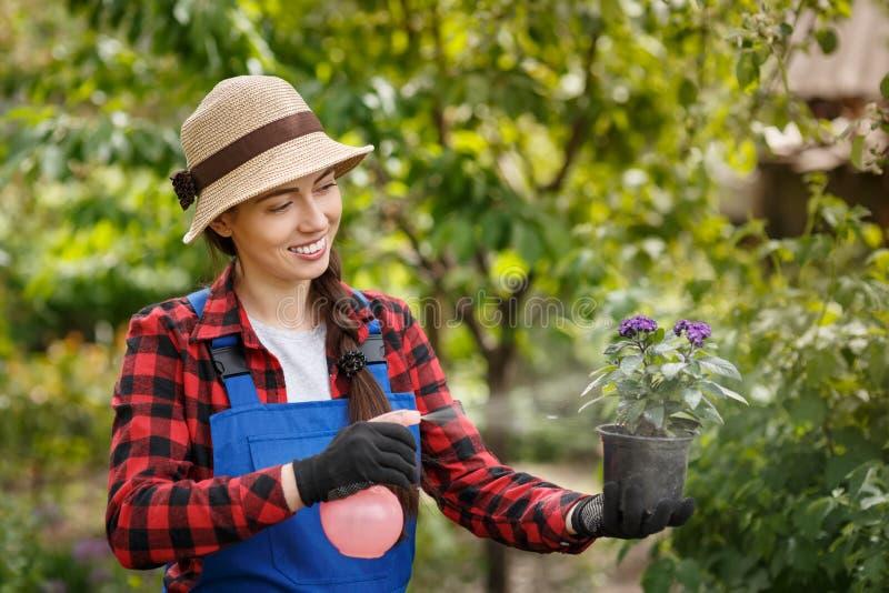 Ogrodniczki opryskiwania woda na kwiatach w garnku lub pestycyd fotografia royalty free