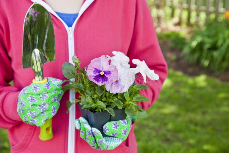 ogrodniczki pansy fotografia stock