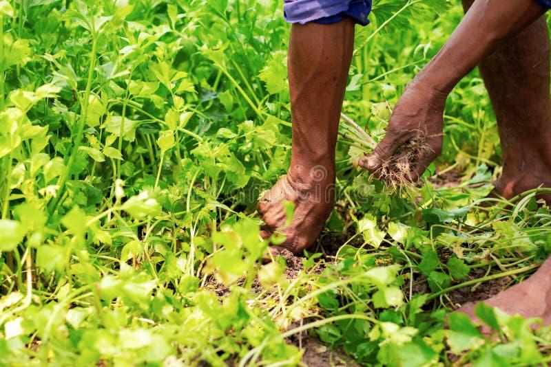 Ogrodniczki usuwają rośliny zdjęcia royalty free