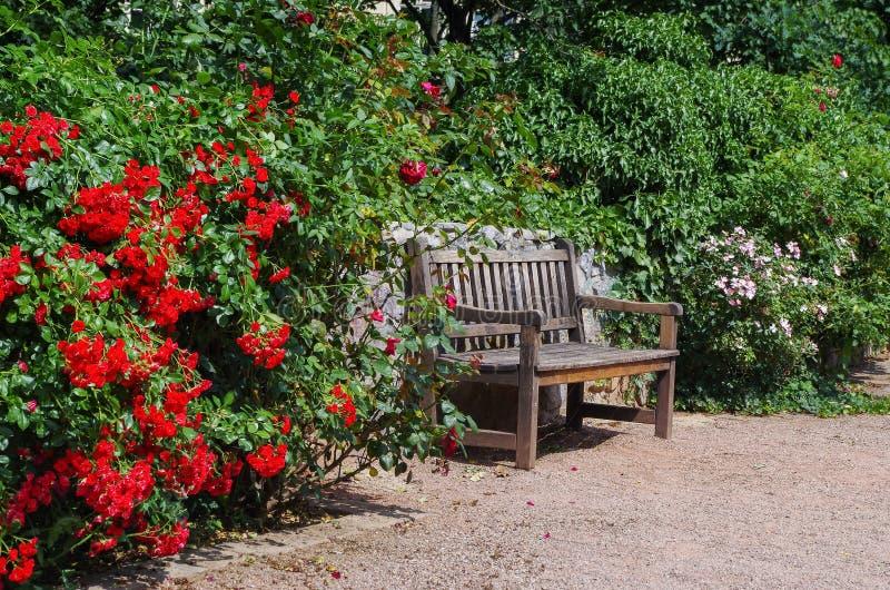 Ogrodowa ławka otaczająca okwitnięcie krzakami obrazy royalty free