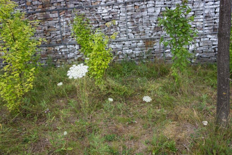 Ogrodowa ściana z zieloną łąką zdjęcie stock