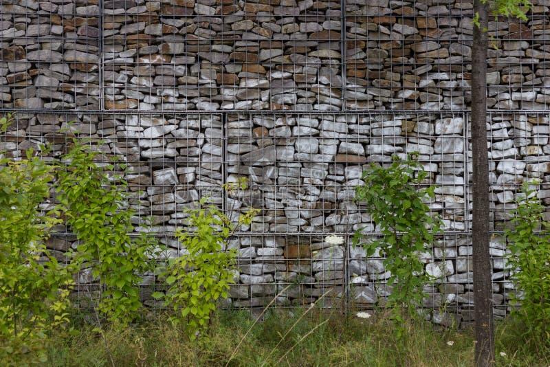 Ogrodowa ściana z zielonymi florami obrazy stock