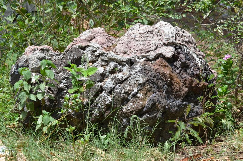 Ogrodowa Duża skała wokoło zmielonych rośliien fotografia royalty free