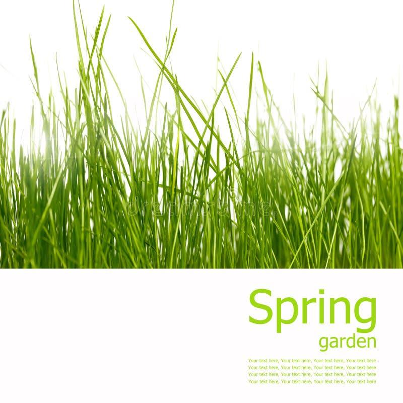 ogrodowa kolaż wiosna obraz royalty free