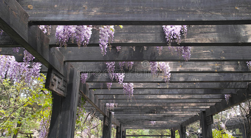 ogrodowa pergola obrazy stock