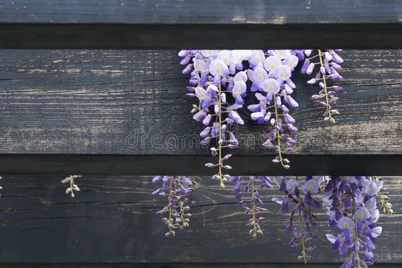 ogrodowa pergola zdjęcia stock